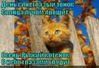 https://lolkot.ru/2013/03/23/den-sineglazyy/