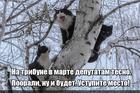 https://lolkot.ru/2018/03/10/deputatskoye-mesto/