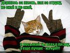 https://lolkot.ru/2012/11/07/derzhis-za-zhizn/