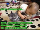 https://lolkot.ru/2019/02/22/detsadovskiy-dzen/