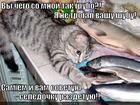 https://lolkot.ru/2014/02/15/deystvitelno-na-figa-kotu-shubu-yest/
