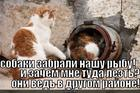 https://lolkot.ru/2014/12/14/deystvitelno-sobaki/