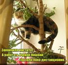 https://lolkot.ru/2020/08/12/distantsionnaya-uchenost/