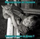 https://lolkot.ru/2013/11/01/dobrovolets/