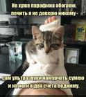 https://lolkot.ru/2020/05/27/doktor-ay-ne-bolit/