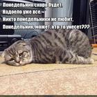 https://lolkot.ru/2016/04/16/doloy-ponedelniki/
