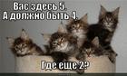 https://lolkot.ru/2010/05/14/dolzhno-byt-4/