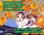 https://lolkot.ru/2017/10/02/dom-dlya-kota/