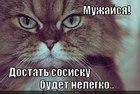 https://lolkot.ru/2012/05/04/dostat-sosisku/