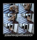 https://lolkot.ru/2011/03/16/dovypendriyebyvalsya/