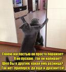 https://lolkot.ru/2016/07/01/draznyuk/
