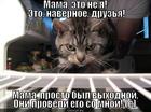 https://lolkot.ru/2013/08/28/druzya-4/