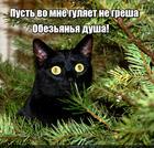 https://lolkot.ru/2016/01/02/duh-obezyanki/