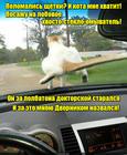 https://lolkot.ru/2017/01/23/dvornik-vasya/