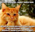 https://lolkot.ru/2020/07/05/dvoynoy-zagovor/