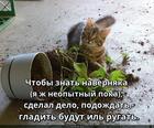 https://lolkot.ru/2020/01/01/empiricheskoye-ozhidaniye/