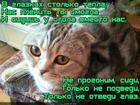 https://lolkot.ru/2018/06/21/eti-glaza-naprotiv-s/
