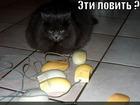 https://lolkot.ru/2011/03/18/eti-lovit/