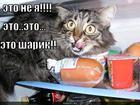 https://lolkot.ru/2010/06/09/eto-sharik/