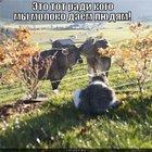 https://lolkot.ru/2011/03/26/eto-tot/