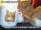 https://lolkot.ru/2012/04/16/eto-yeschyo-tsvetochki/