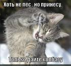 https://lolkot.ru/2015/04/28/fas-kolbas/