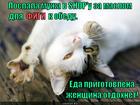 https://lolkot.ru/2013/12/28/fastfud/