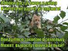 https://lolkot.ru/2014/11/24/frikadelnoye-derevtse/