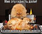 https://lolkot.ru/2011/05/12/gadost-dali/