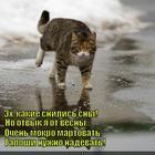 https://lolkot.ru/2015/07/25/galoshi/