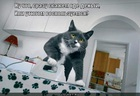 https://lolkot.ru/2011/06/06/gde-dengi/