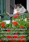 https://lolkot.ru/2015/08/17/gde-zhe-etot-romeo/