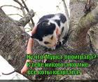 https://lolkot.ru/2015/07/15/glavnoye-pravilno-zainteresovyvat/