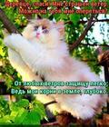 https://lolkot.ru/2018/12/02/glubokaya-zaschita/