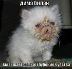 https://lolkot.ru/2010/01/19/glubokiye-chuvstva/