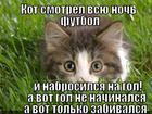 https://lolkot.ru/2013/01/31/gol-ne-nachinalsya/