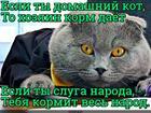 https://lolkot.ru/2018/05/20/golodayuschiy-2/