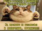 https://lolkot.ru/2014/06/06/golodnyy-organizm/