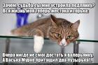 https://lolkot.ru/2015/12/24/gore-valerianovoye/