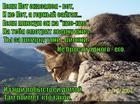 https://lolkot.ru/2015/06/10/gornyy-saygak/