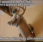 https://lolkot.ru/2011/06/18/govorila-hozyayka/