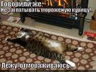 https://lolkot.ru/2013/11/06/govorili-zhe/