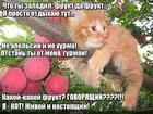 https://lolkot.ru/2017/08/30/govoryaschiy-frukt/