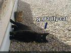 https://lolkot.ru/2011/12/05/gravity-cat/