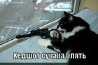 https://lolkot.ru/2011/11/10/hedshot/