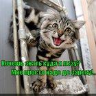 https://lolkot.ru/2012/07/09/hochesh-znat-kuda-ya-lezu-mne-prosto-nado-do-zarezu/