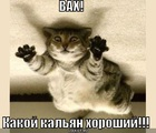 https://lolkot.ru/2011/02/11/horoshiy-kalyan/