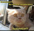 https://lolkot.ru/2011/11/14/hozyaiiiin/