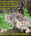 https://lolkot.ru/2012/06/07/hrenovo-na-dushe/