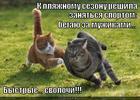 https://lolkot.ru/2013/03/08/hudeyem-chyo/